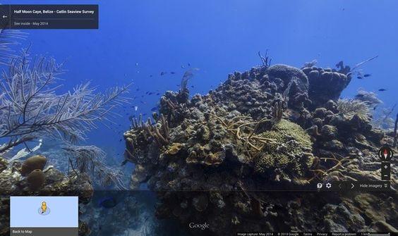 Vem crescendo o acervo do Street View nos oceanos, onde podemos ver animais marinhos como tubarões, baleias, peixes raros, tartarugas e diversas espécies. No dia 8 de junho, Dia Mundial dos Oceanos, foi lançada a versão de Belize, na América Central. Saiba como ver estas maravilhas no TechTudo, por Raquel Freire.