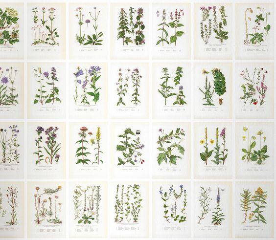 Sandberg Tapeter Sverige : explore sandberg botanical botanica sandberg and more josef frank