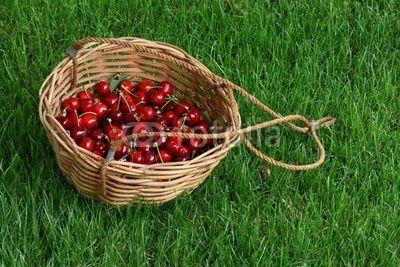 Cesto con ciliegie