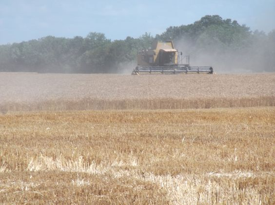 Rolling in the Wheat; Neal, KS; Agriculture at Work. LIKE, COMMENT, OR SHARE TO VOTE!
