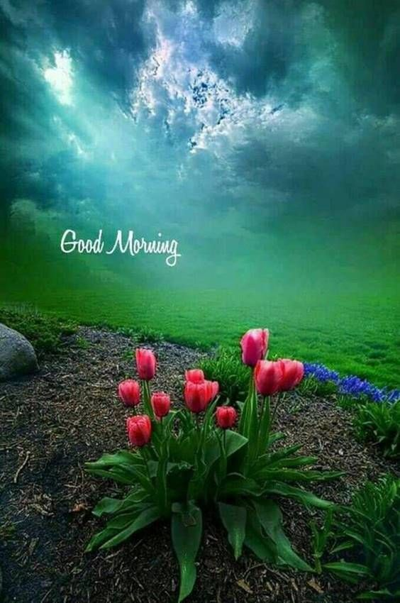 31 Good Morning Greetings Pictures And Wishes With Beautiful