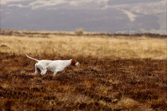 Dogs at Work, Winner: Susan Stone Amport