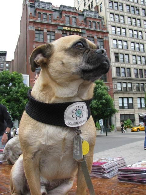 Congratulations to our Dogs of New York Photo Contest Winners!