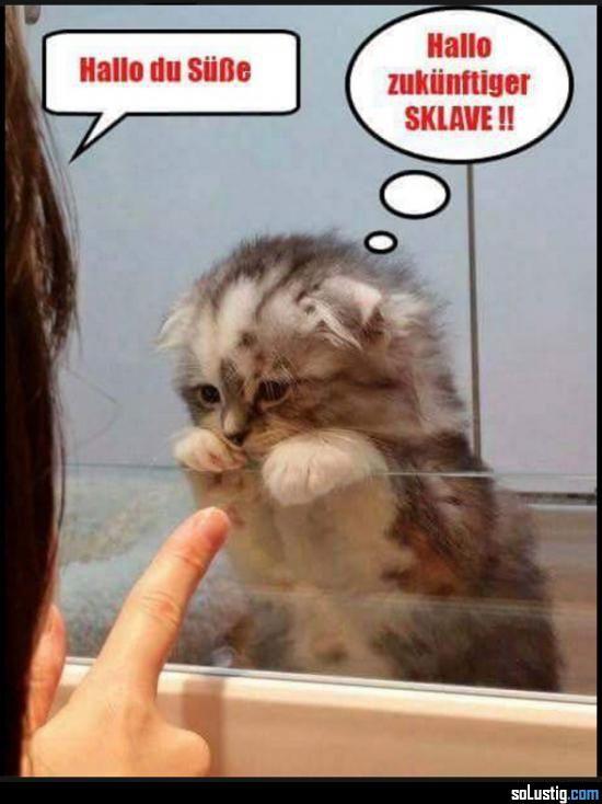 Hallo Du Süße Hallo Zukünftiger Sklave Katzen Lustige