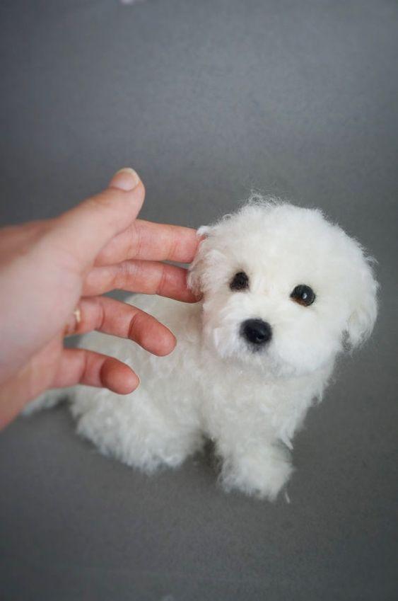 Life Size Needle Felted Puppy Maltese Dog by JanetsNeedleFelting
