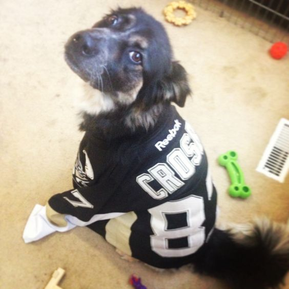 Even Ivy loves Crosby