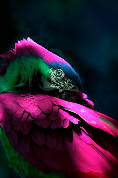 Macaw Plumage