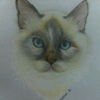 Cat in color pencil.