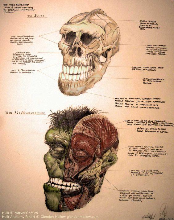 The Flying Trilobite: Incredible Hulk Anatomy