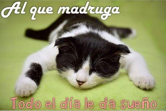 Pin De Vanessa Rojas En Funny Stuff En 2020 Amor De Gatos Gato Durmiendo Buenos Dias Divertido