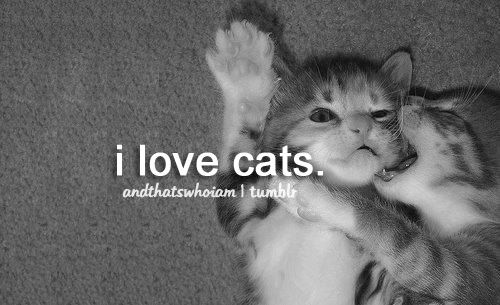 I will be a cat lady when I'm older. Me and Haz and our 27 cats. Yep. It could happen. ;)