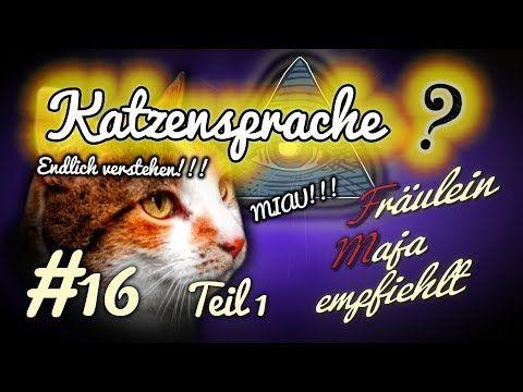 Katzensprache 8 Katzenemotionen Die Ihr Bisher Falsch Gedeutet