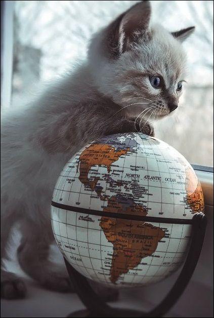 globe trotting kitten