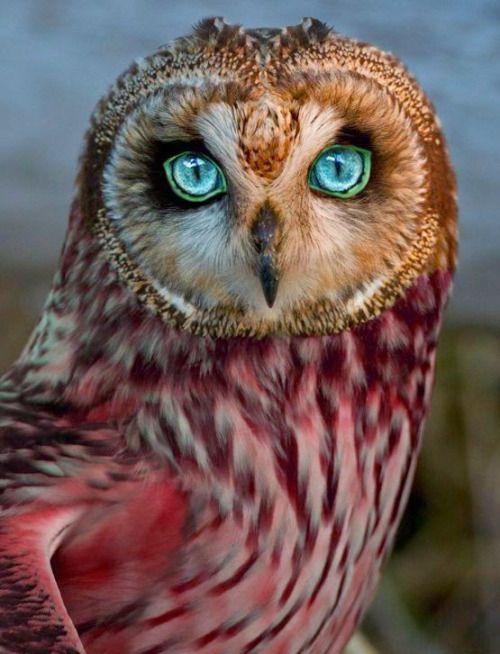 a-garota-de-capa-vermelha:  Hypnotic gaze…