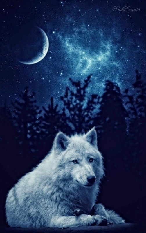 Pin By Cindy85 On Wolves X In 2020 Wolf Wallpaper Wolf Pictures Wolf Spirit