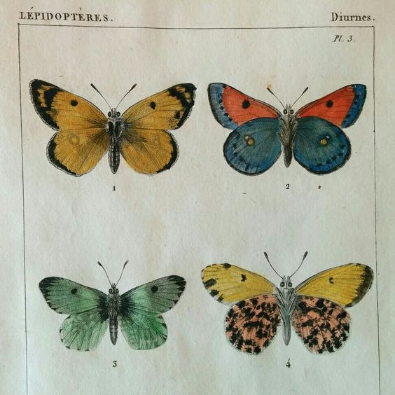 Beautiful colorful butterflies. Antique artwork
