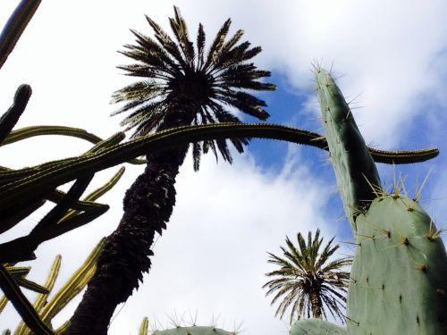 Anne-Sophie Tschiegg - jardim botanico Lisboa