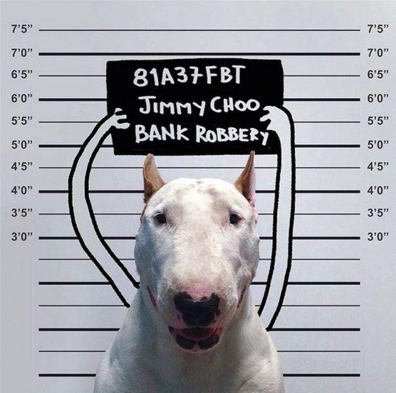 Rafael_Mantesso_Creates_Playfull_Illustrations_Around_His_Bull_Terrier_2014_01