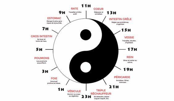 Insomnies? Du mal à se réveiller ? L'horloge biologiquedécouverte par la médecine chinoise peut aider à rétablir naturellement son rythme biologique. UNE SCIENCE MILLÉNAIRE Il y a longtemps, la médecine traditionnelle chinoise (MTC) a découvert que le corps fonctionne selon une«horloge des organes» qui se reflète dans les méridiens d'énergie, eux-mêmesliés aux différents organes. On …