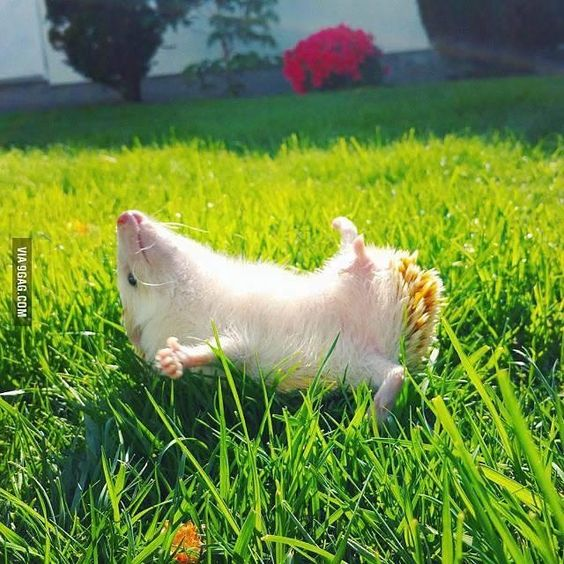 I love sunbathing #9gag: