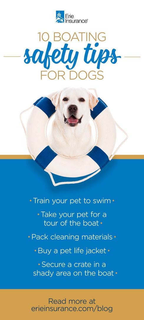 Boating With Dogs Expert Shares Top 10 Water Safety Tips Dogs