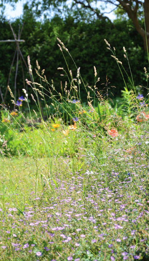 Mein wilder Garten im Juni 2015