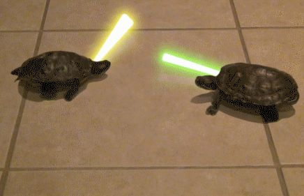 Couple Of Turtles Dueling With Light Sabers (click through to see GIF in action)