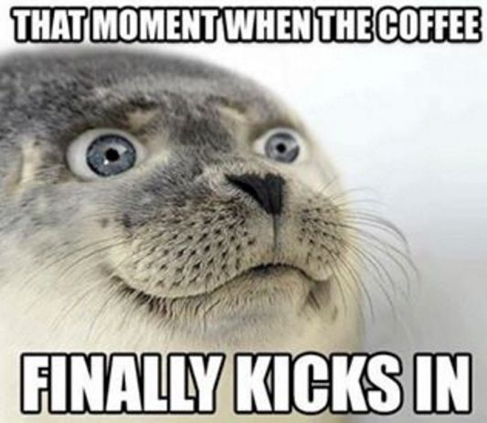That Moment Coffee Meme Coffee Humor Funny Seals