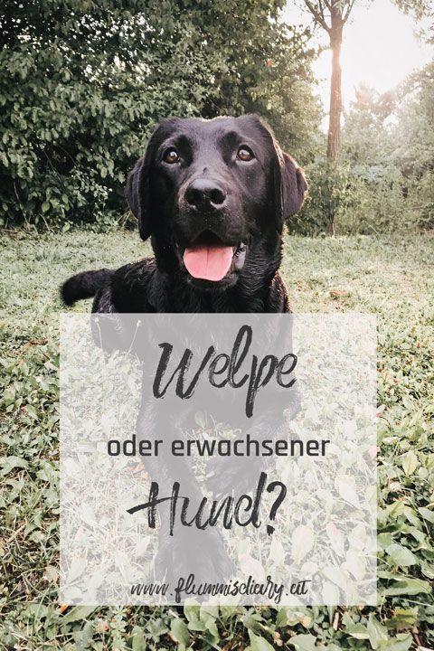 Welpe Oder Erwachsener Hund Welpen Hund Adoptieren Hunde
