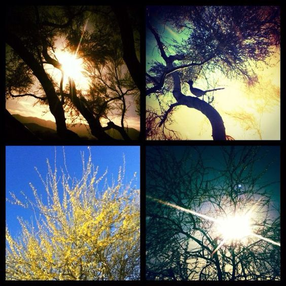 four pictures of nature