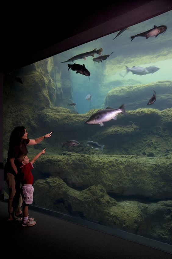 spring break idea 8 explore the blue hole exhibit at the
