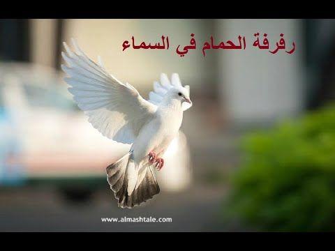 طيران ورفرفة طيور الحمام المدهشة في سماء القاهرة Almashtale Com Animals Release Dove