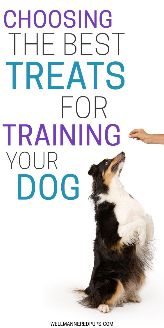 How To Choose And Use Treats In Training Your Dog Best Treats For Dogs Dog Biting Training Dog Training Treats