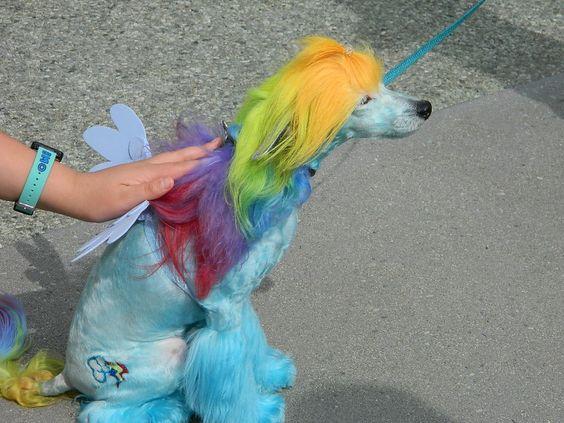 rainbow dog | Rainbow Dash Dog