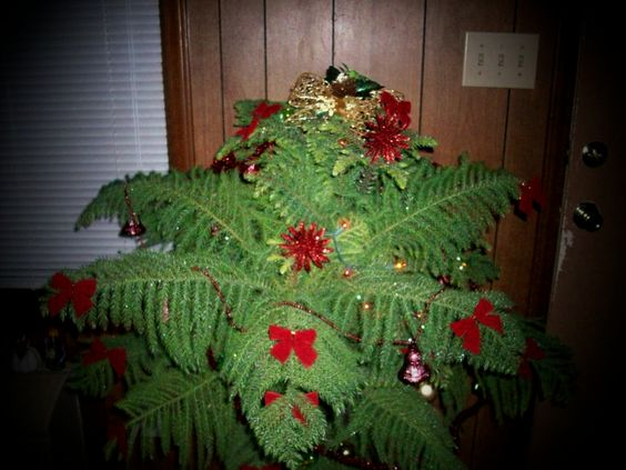 This is our Happy Tree. Today it is wearing its Yule attire and that makes us happy. When we look at our tree with its fancy decorations it is hard to be sad. Our tree likes to sport the mode of...