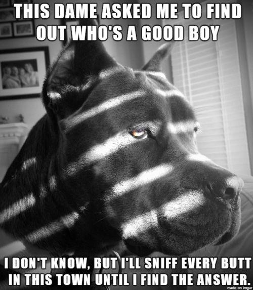 bb6b6749b2fcdb49c53df0bf4bf2c6ba--funny-animal-memes-dog-memes.jpg