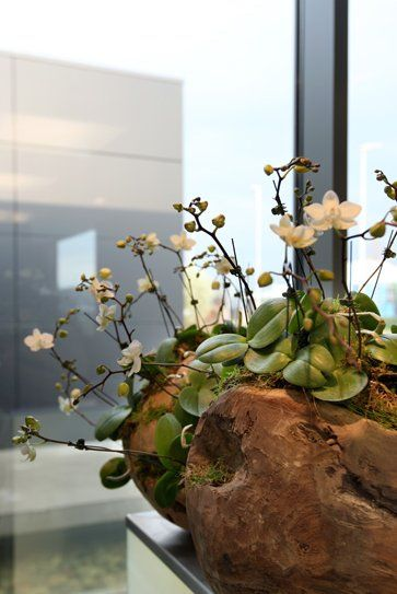 Mini Orchid Display Style In Flowers Pinterest Love