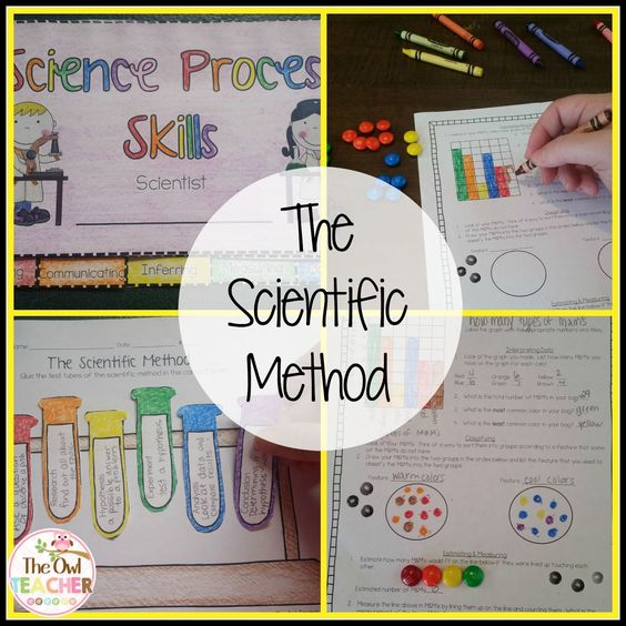 Science Experiment Gummy Bears Lab/ The Scientific Method Worksheet - scientific method worksheet