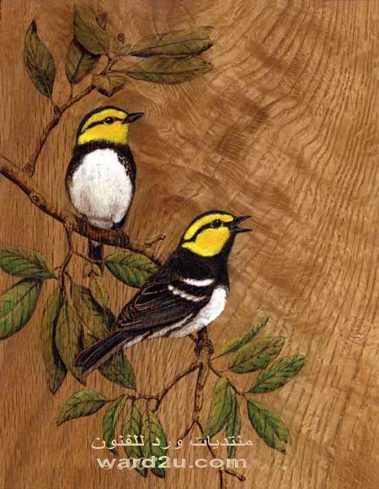 رسومات على الخشب طيور بالالوان Wood Carving Art Bird Art Pyrography