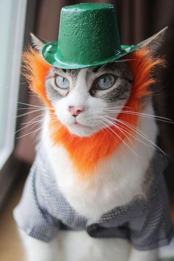 Dress up your cat in a St Patrick's Day-themed Halloween costume.