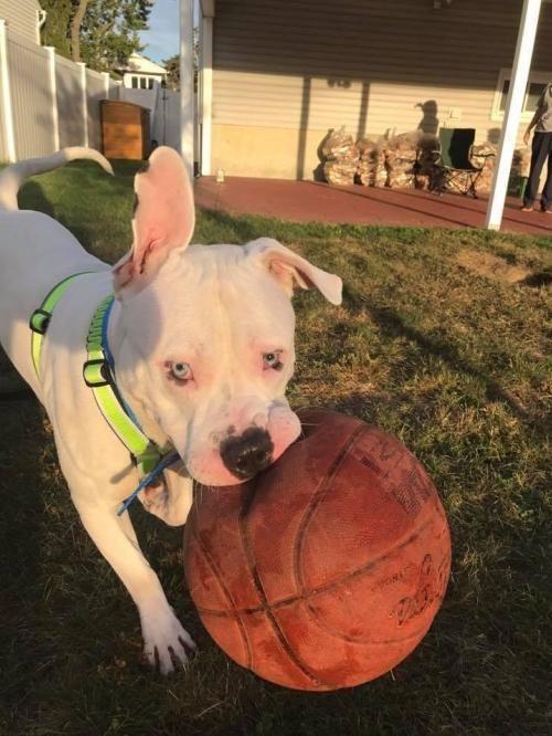Adopt Sam On Animals Dog Photography Animal Rescue