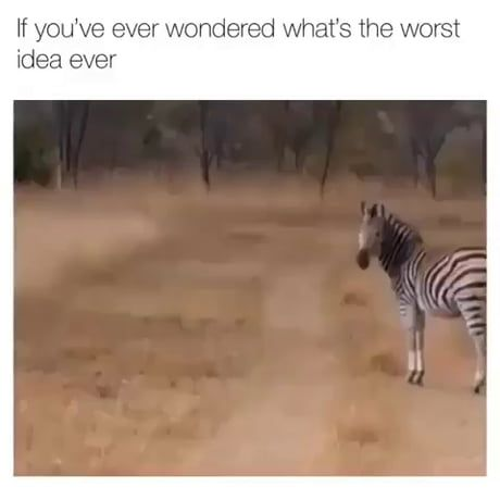 What could go wrong if we try to be zebra