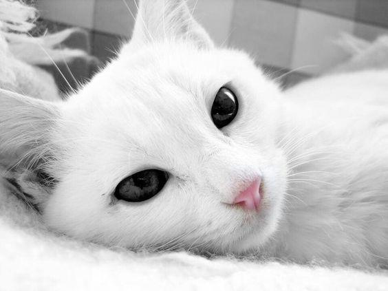 Via kattenmutsen