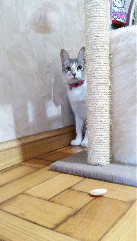 Agatha, playing hide! Beautiful.
