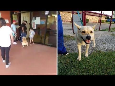 Scared Dog Is Dragged Into High Kill Shelter By Family Youtube With Images Dogs Animal Shelter Scared