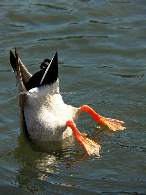 A Ducks Butt 41