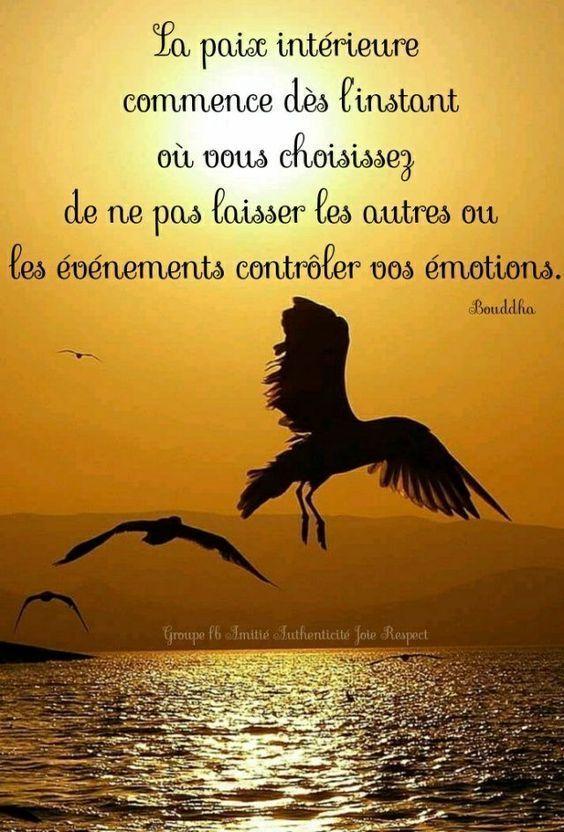 Citation Bouddha Accepte Ce Qui Est : citation, bouddha, accepte, Bouddha, #Bouddha, Citation,, Citations, Bouddhistes