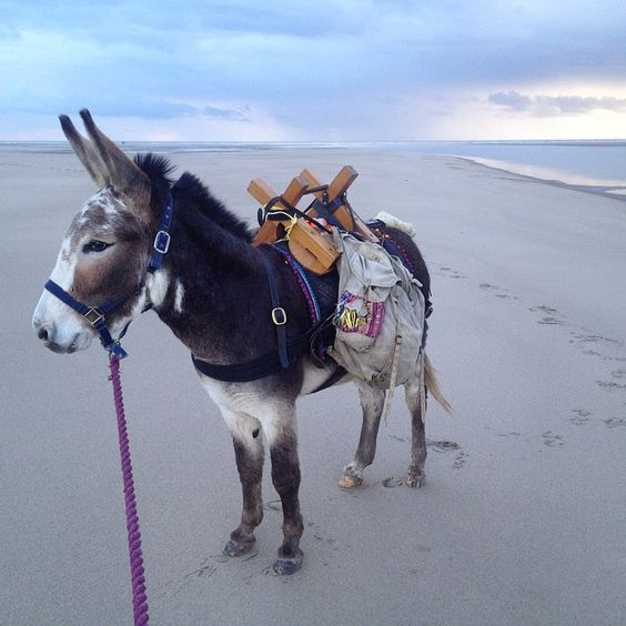 Seaside donkey: