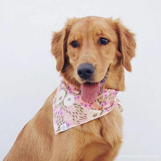 Harper Floral Dog Bandana – The Foggy Dog