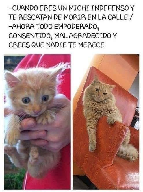 Pin De Vanessa Ezeriguer En Cats Imagenes De Perros Memes Divertidos Historietas Divertidas